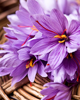 Iranian saffron types And introduce the best type of saffron