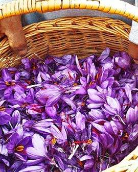Persian Saffron, Red gold of the world